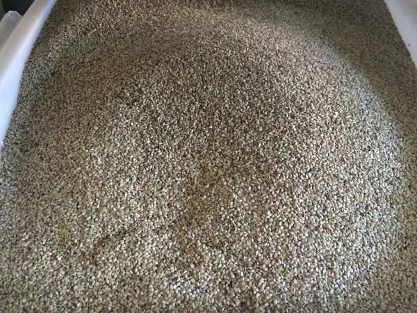百喜草种子的价格是多少?