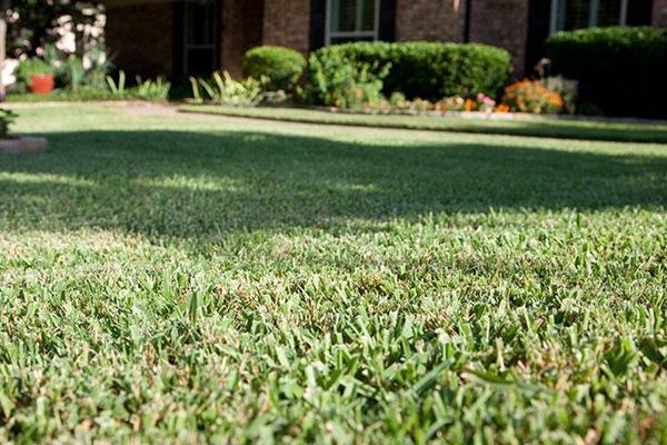 草坪红线病的症状及防治方法