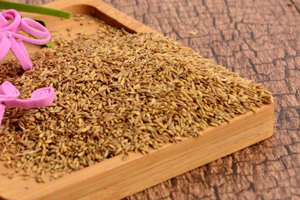 日本结缕草种子的播种方法及种植技巧