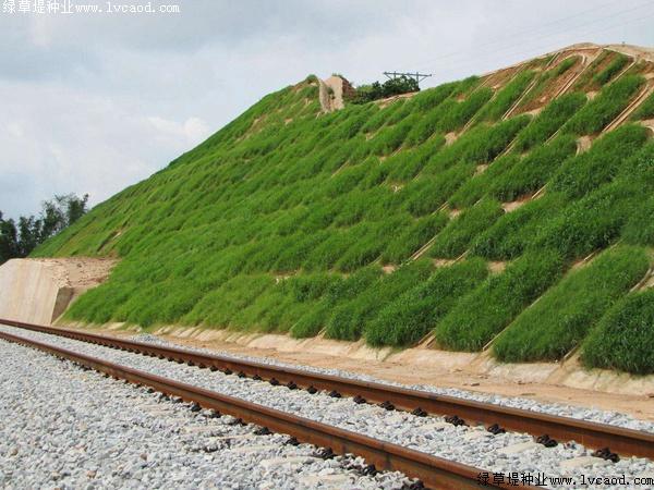 铁路路基护坡绿化工程应用