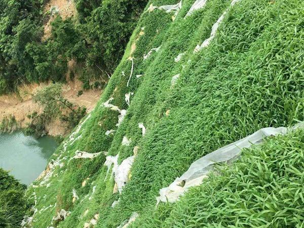 草坪在矿山复绿工程应用