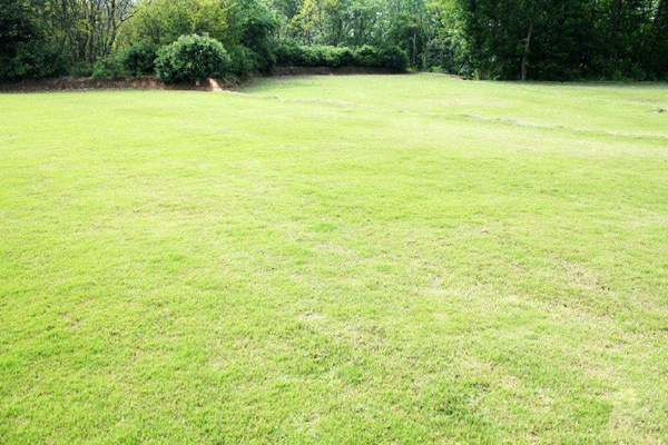 百慕大草坪为什么会变黄,如何处理?