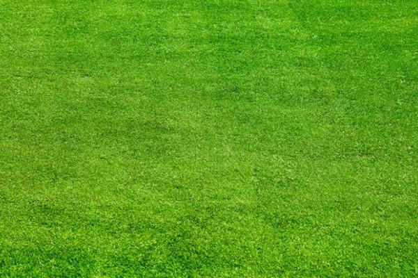 最全的草坪浇水指南