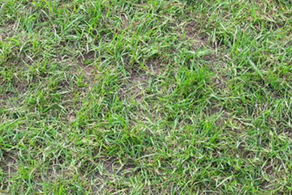 如何用草坪种子补植草坪?