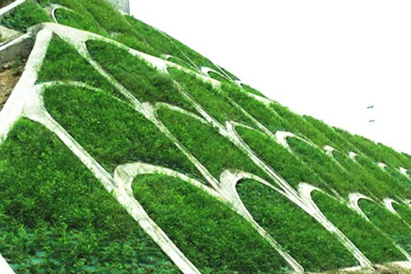 护坡草坪如何种植