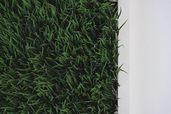 草坪施肥指南之什么时候施肥,怎么施肥,施什么肥?
