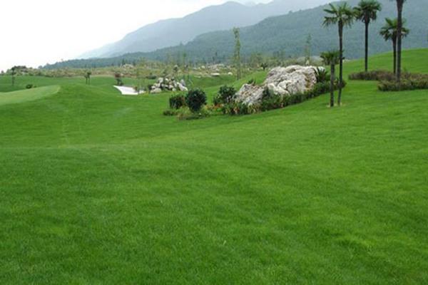 草坪老化后的常见问题